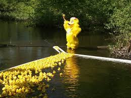Rubber ducks racing during the Walpole Duck race