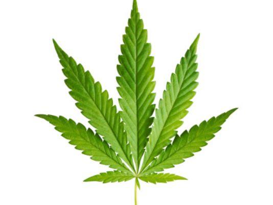 Should Massachusetts Legalize Marijuana?