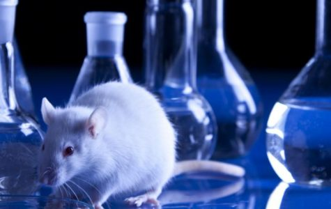 Animal Testing Must End in the United States
