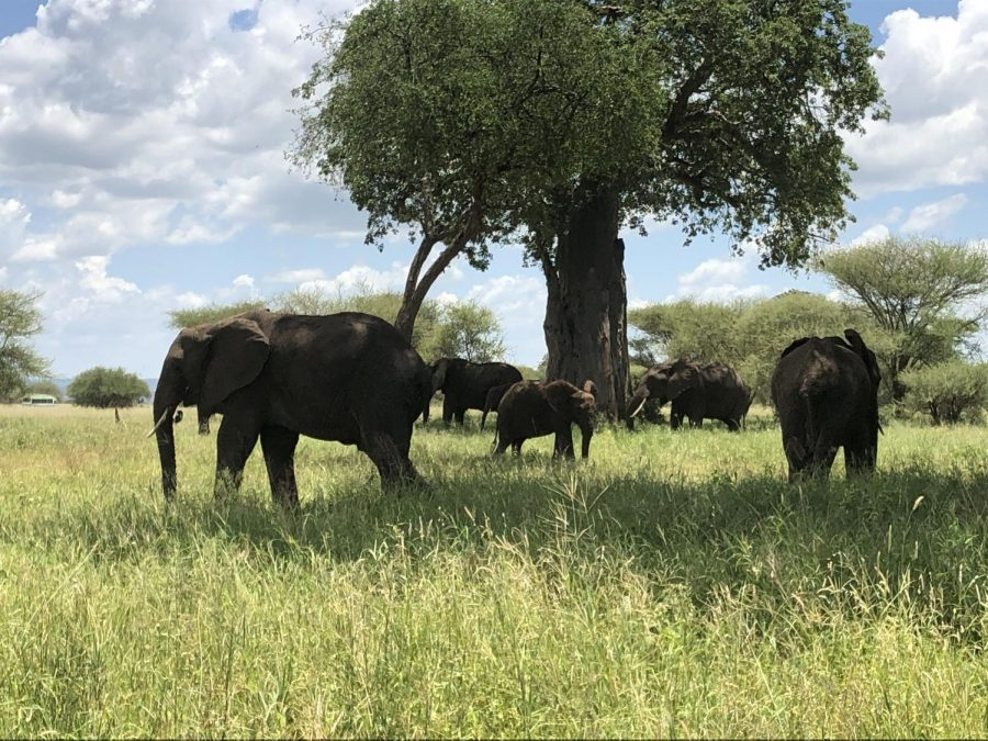 Gallery: A Walk Through Tanzania: Students and Teachers Travel for Service Trip