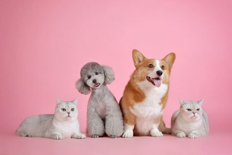 Sit! Stay! and Read About the Best Pet Grooming Salons